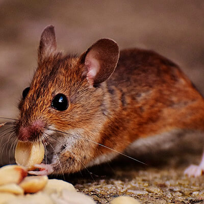 servicios profesionales control de plagas comunidades de propietarios ratas vecindia - Control de plagas en comunidades de propietarios