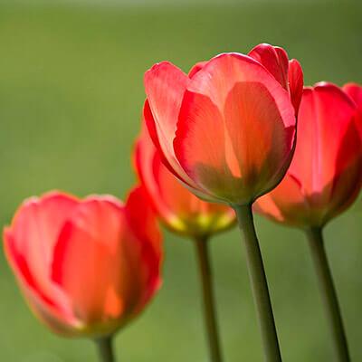 servicios profesionales jardineria para comunidades de propietarios amapolas vecindia - Jardinería para comunidades de propietarios