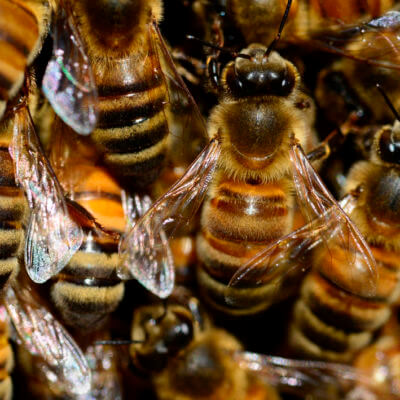 servicios profesionales servicios de control de plagas abejas comunidades de propietarios vecindia - Control de plagas en comunidades de propietarios