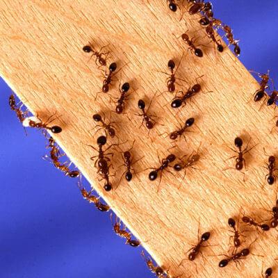 servicios profesionales servicios de control de plagas comunidades de propietarios hormigas vecindia - Control de plagas en comunidades de propietarios